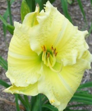 hémérocalle Brocaded Gown leparadisdansmacour.com