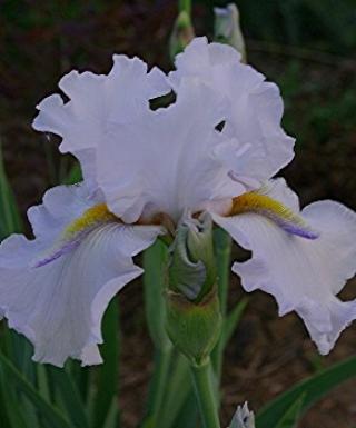 Iris Casual Joy leparadisdansmacour.com