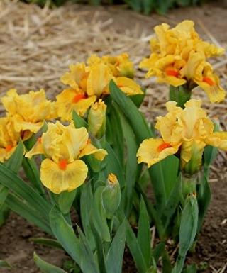 Iris Clever leparadisdansmacour.com