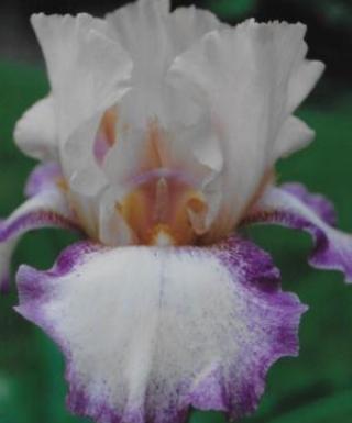 Iris Color Spirit leparadisdansmacour.com