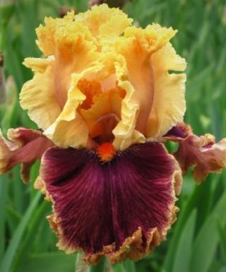 Iris Decadence leparadisdansmacour.com