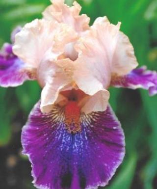 Iris Flying Circus leparadisdansmacour.com