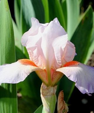Iris Tic Tac Toe leparadisdansmacour.com