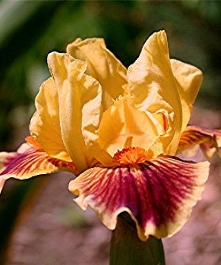 Iris Zooboomafoo eparadisdansmacour.com