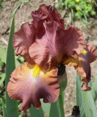 Iris Chippendale leparadisdansmacour.com