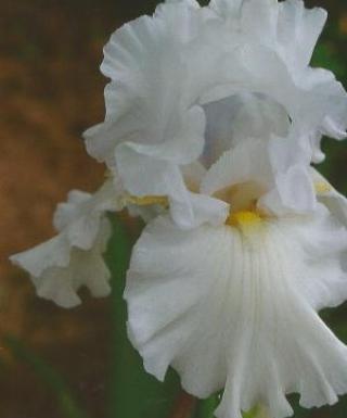 Iris Garden Pride leparadisdansmacour.com