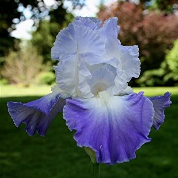 Iris Clarence leparadisdansmacour.com