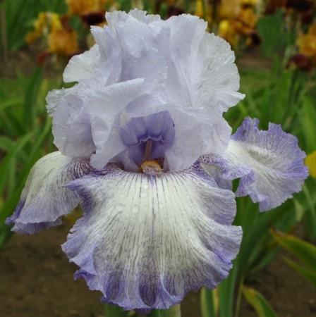 Iris Acoma leparadisdansmacour.com