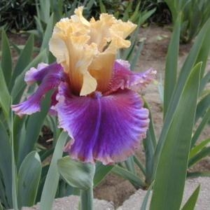 Iris Final Episode leparadisdansmacour.com