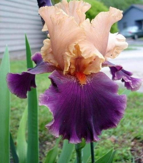 Iris Naples leparadisdansmacour.com