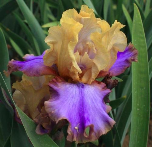 Iris Sargent Preston leparadisdansmacour.com